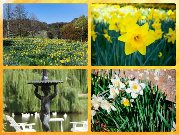 Tour to Country Fair:  'Daffodil Country Gardens'